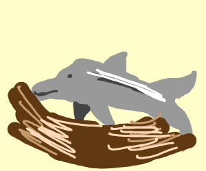 Dolphin in a Nest