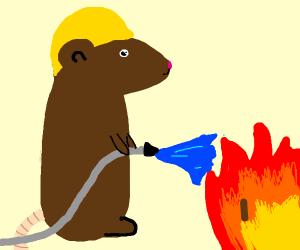 Cute Firefighter rat