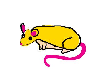 Yellow rat