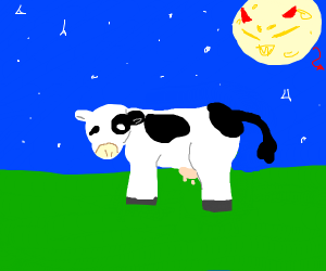 evil moon stares down a cow