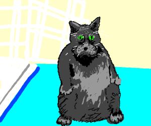 Chonky cat (not Garfinkel)