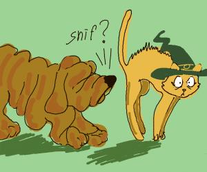 dog smells wizard cat's butt