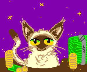 Cute cat likes money