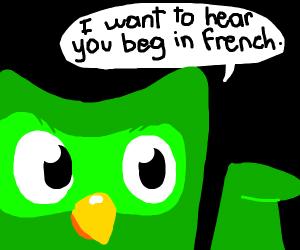 duolingo bird wants to hear you beg in french