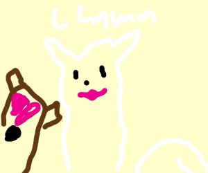 A pretty llama