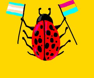 LGBT Lady Bug