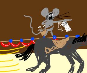 Rat wants horseTo winRace she used all money