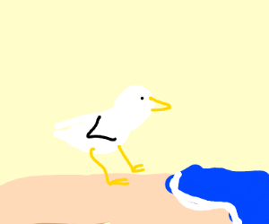 Seagulls chilling at the beach