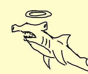 Angelic hammer head shark