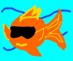 orange fish with sunglasses