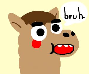 Alpaca saying Bruh