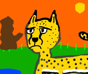 A serious, intense cheetah