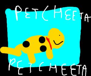 PET CHEETAH PET CHEETAH PET CHEETAH PET CHEET