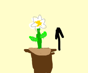 A plant growing