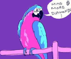 Parrot singing Mine Diamonds