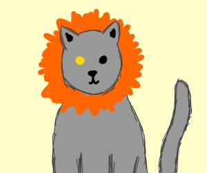 A grey cat with an orange mane & yellow eye