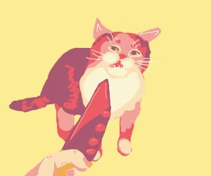 knife cat meme