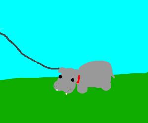 Pet Hippo