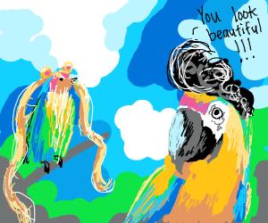 Birds trying wigs