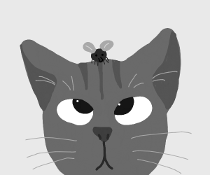 Cat with fly on it's head