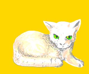if a cat was a creepypasta