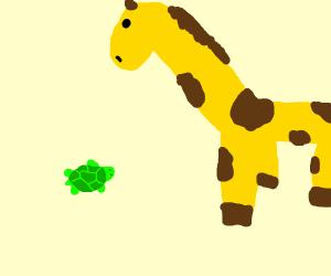 Turtle looks up to giraffe