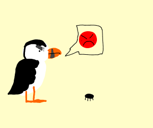 Puffin threatens insect