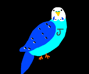 Blue budgie with a J on it