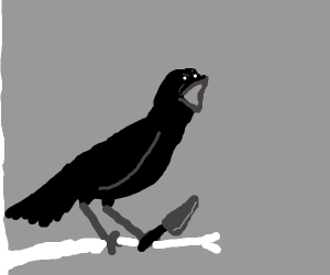 EXTREMELY angry crow wanting revenge