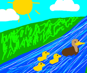 Mother duck leads ducklings upstream