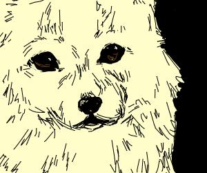 Corgi face