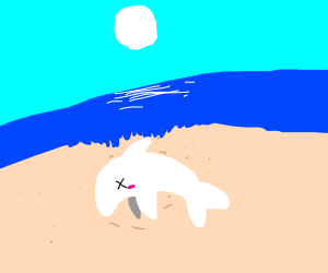Dead shark on the beach