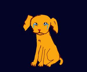 Saddest Puppy
