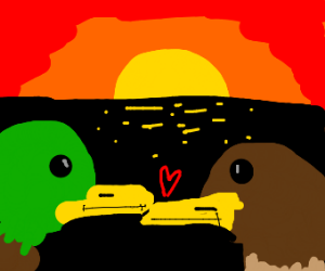 Two ducks looking at each other at sunset