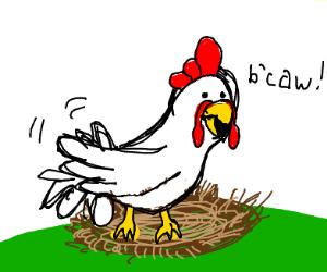 Chicken lays egg