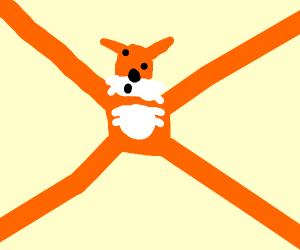 Stretching fox boi