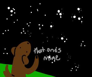 Dog claims star