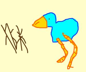 bird stares at sticks