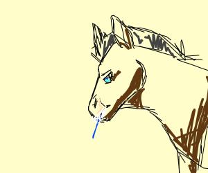 horse eating toothbrush