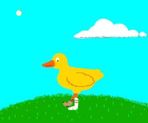 duck with mismatched socks