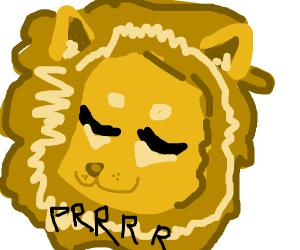 A lion purrs