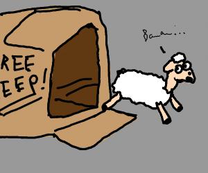 Abandoned baby sheep escapes box :')