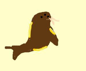 Oily Walrus