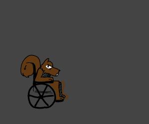 Chipmunk in wheel chair