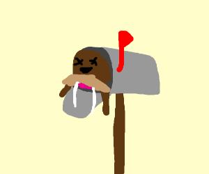dead walrus in a mailbox