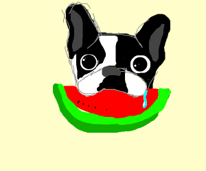 Awww. A cute dog eating a piece of melon