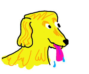 Golden retriever sticking it's tounge out