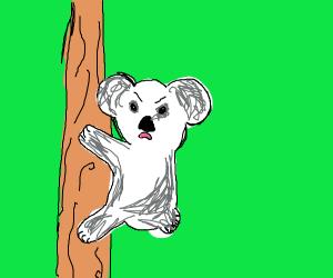 Angry koala.