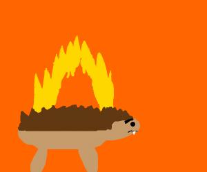 Hedgehog on fire