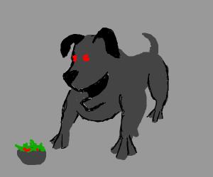 Demon dog wants salad